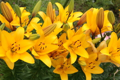 庭に咲く花 Vol.100
