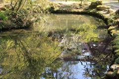 池の水面に浮かぶ春