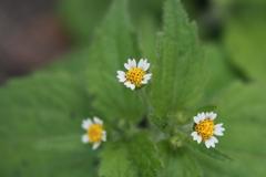 庭に咲く花 Vol.94