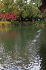 雨の庭園 1