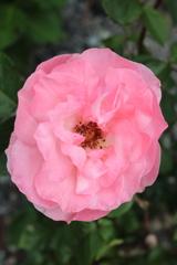 庭に咲く花 Vol.68