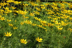 庭に咲く花 VOL.108