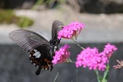 庭に咲く花 番外 蝶VOL.2