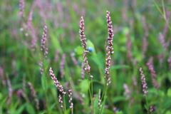 庭に咲く花 Vol.138