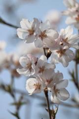 庭に咲く花 Vol.13