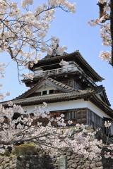 桜と丸岡城