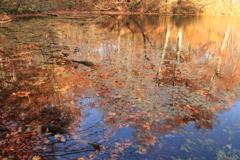 落ち葉は水面で再び蘇り