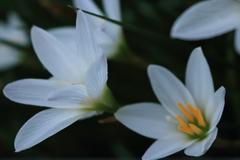 庭に咲く花 Vol.129