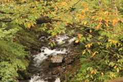 雨の渓流を彩る