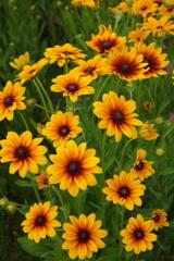 庭に咲く花 Vol.101