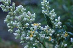 庭に咲く花 Vol.98