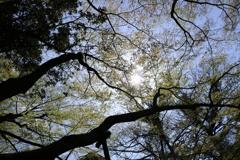 晴天の木漏れ日