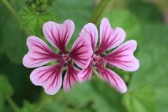 庭に咲く花 Vol.67
