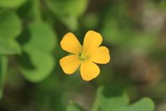 庭に咲く花 Vol.59