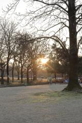 公園の朝陽