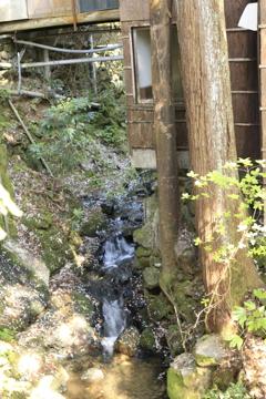 花弁に埋まる渓流