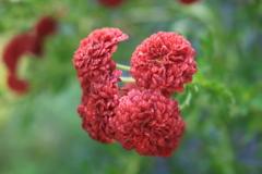 庭に咲く花 Vol.145