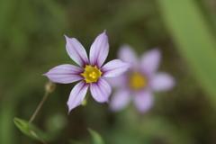 庭に咲く花 Vol.78