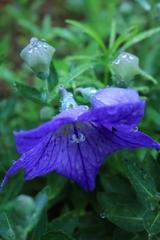 庭に咲く花 Vol.97
