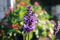 庭に咲く花 Vol.140