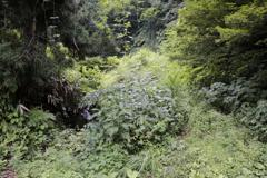 無名滝(アクセス路)