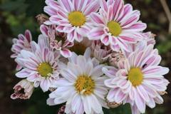 庭に咲く花 Vol.137