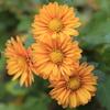 庭に咲く花 Vol.146