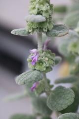 庭に咲く花 Vol.104