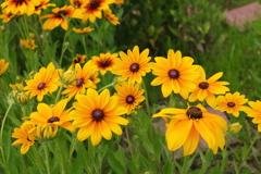 庭に咲く花 Vol.102