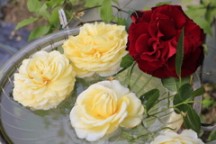 大安禅寺の薔薇園2