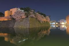 福井城址夜桜1