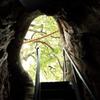 楠の胎内から見る出口