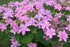 庭に咲く花 Vol.95