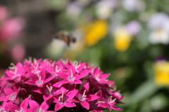 庭に咲く花 Vol.91
