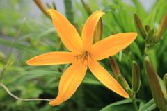 庭に咲く花 Vol.61