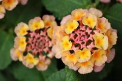 庭に咲く花 Vol.127