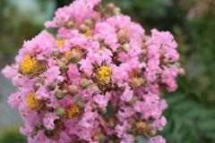 庭に咲く花 Vol.125