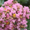 庭に咲く花 Vol.128