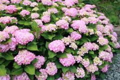 庭に咲く花 Vol.99