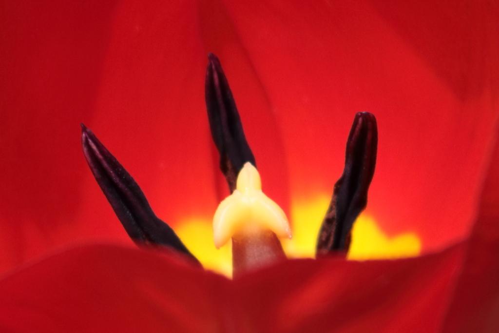 庭に咲く花 番外