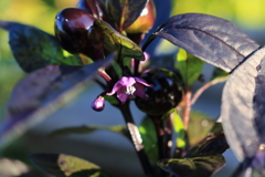 庭に咲く花 Vol.141
