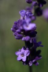 庭に咲く花 Vol.89