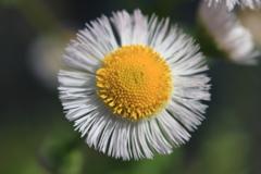 庭に咲く花 Vol.56