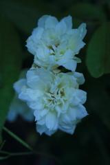 庭に咲く花 Vol.63