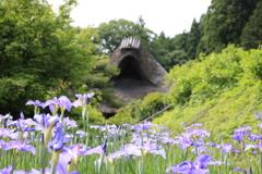 千古の家の菖蒲園1