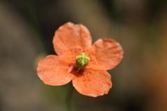 庭に咲く花 Vol.90