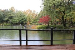 雨の庭園 2