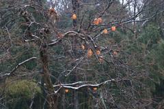 取り残した秋と来る冬