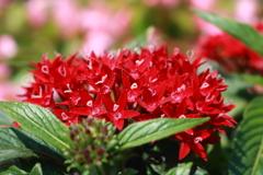 庭に咲く花 Vol.92