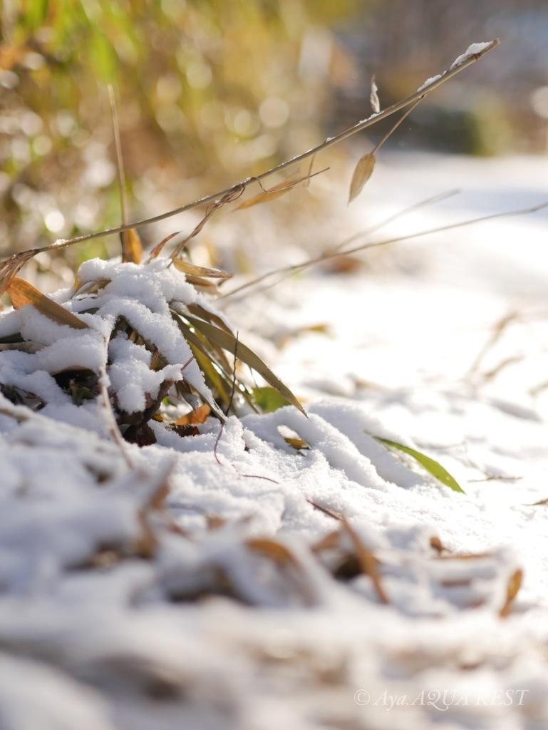 2018冬いつもの裏山、雪